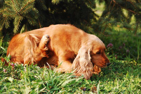 Welk voer is geschikt voor een hond met jeuk?