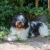 De 9 Nederlandse hondenrassen