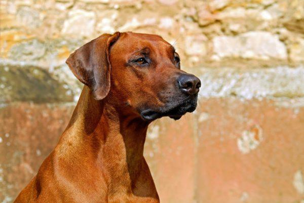6 tips voor het creëren van een glanzende vacht bij je hond