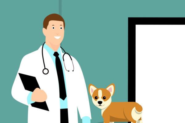 Hondenverzekering | Wat kost het en welke is het beste voor jouw hond?