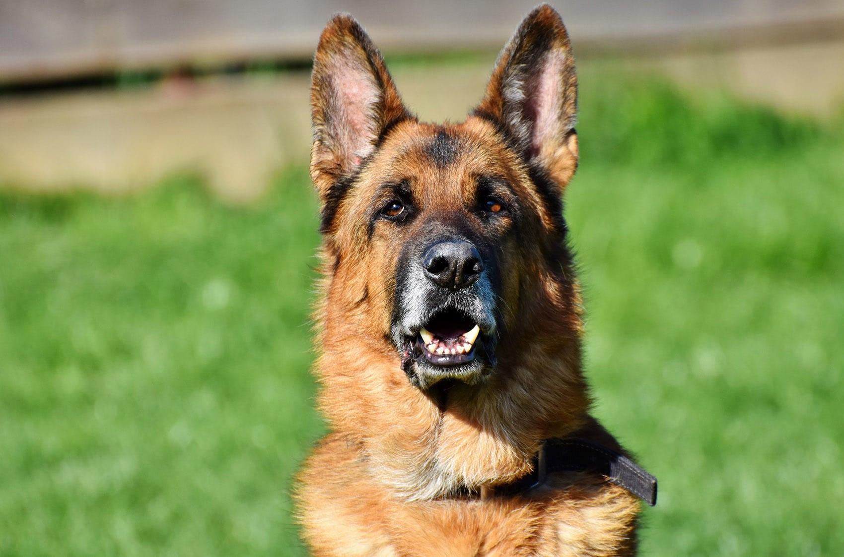 wat mag een hond met nierproblemen eten