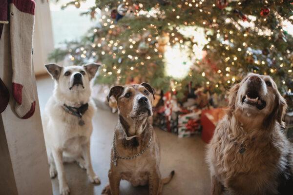 Hondenpoepchique aan het kerstdiner