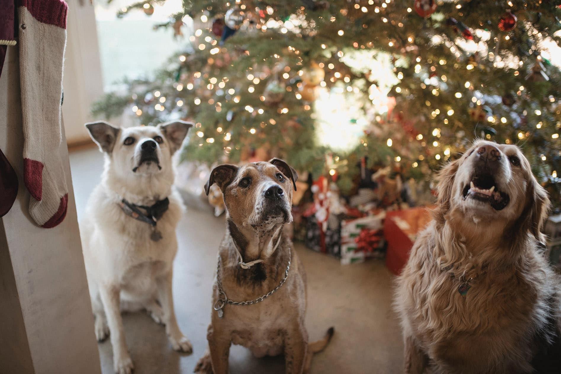 kerst met de hond